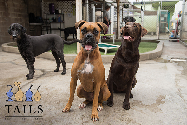 image of dogs at Tails of Hawaii dog daycare